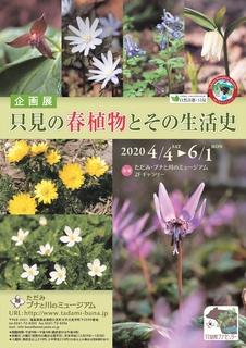 20200402_ただみ・ブナと川のミュージアム企画展「只見の春植物とその生活史」_ポスター.jpg
