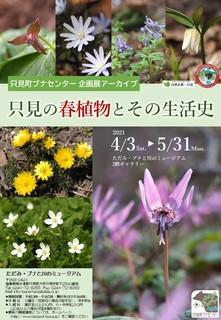20210217_企画展アーカイブ「只見の春植物」_ポスター.JPG