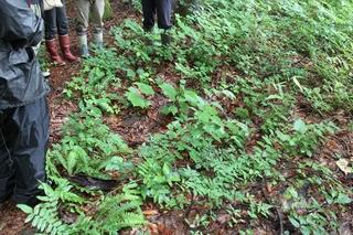 様々な樹種の実生が見られた林床